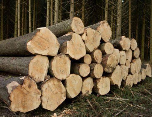 Une bonne conjoncture pour l'industrie du bois, malgré la crise du Covid-19